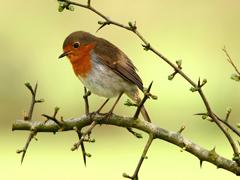 Пазлы онлайн. Картинка №543: Птичка-невеличка . Размер картинки: 640х480