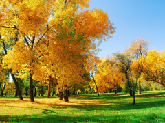 Пазлы онлайн. Картинка №551: Золотая осень . Размер картинки: 640х480