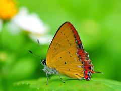 Пазлы онлайн. Картинка №553: Бабочка-красавица . Размер картинки: 640х480