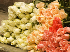 Пазлы онлайн. Картинка №564: Цветы у ног твоих . Размер картинки: 640х480