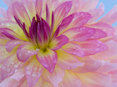 Пазлы онлайн. Картинка №60: После дождя . Размер картинки: 640х480