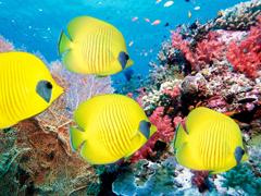 Пазлы онлайн. Картинка №683: Океанский аквариум . Размер картинки: 640х480