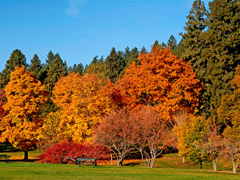 Пазлы онлайн. Картинка №691: Ранняя осень . Размер картинки: 640х480