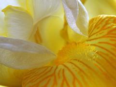 Пазлы онлайн. Картинка №70: Желтая мечта . Размер картинки: 640х480