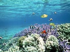 Пазлы онлайн. Картинка №71: Коралловый риф . Размер картинки: 640х480
