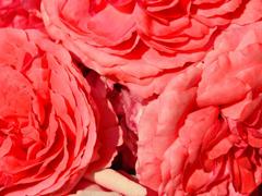 Пазлы онлайн. Картинка №718: Цветочное настроение . Размер картинки: 640х480
