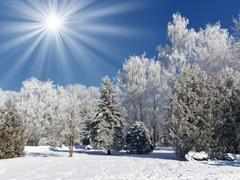 Пазлы онлайн. Картинка №727: Морозное утро . Размер картинки: 640х480