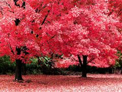 Пазлы онлайн. Картинка №73: Красная осень . Размер картинки: 640х480