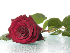 Пазлы онлайн. Картинка №736: Розовый сюрприз . Размер картинки: 640х480