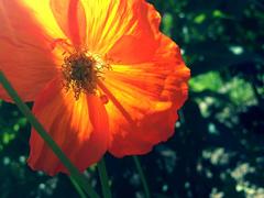 Пазлы онлайн. Картинка №760: Весна . Размер картинки: 640х480
