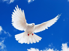 Пазлы онлайн. Картинка №773: Птица мира . Размер картинки: 640х480