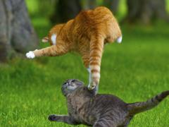 Пазлы онлайн. Картинка №795: Кошачий спецназ . Размер картинки: 640х480