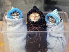 Пазлы онлайн. Картинка №805: Котята - тройняшки . Размер картинки: 640х480