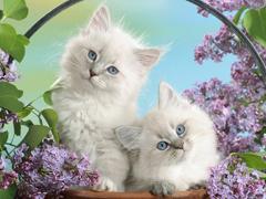 Пазлы онлайн. Картинка №823: Два брата - акробата . Размер картинки: 640х480