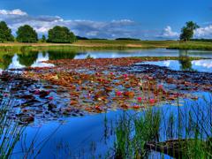 Пазлы онлайн. Картинка №825: Летнее озеро . Размер картинки: 640х480