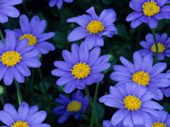 Пазлы онлайн. Картинка №833: Букет из ультрафиолет . Размер картинки: 640х480