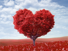Пазлы онлайн. Картинка №849: Романтическое дерево . Размер картинки: 640х480