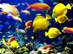 Пазлы онлайн. Картинка №880: Подводный мир . Размер картинки: 640х480